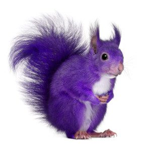 6 Key Steps to finding your Perfect Employee ....The Hunt for the Purple Squirrel